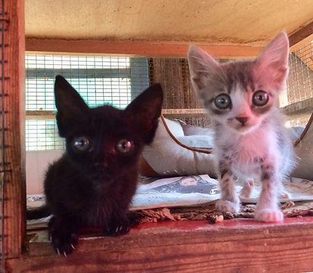 Katzen 9.jpg