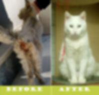 Weiße_Katze.jpg
