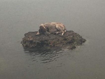 Hund auf Felsen.jpg