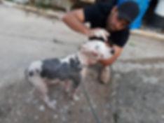 Hund Matilda 3.jpg