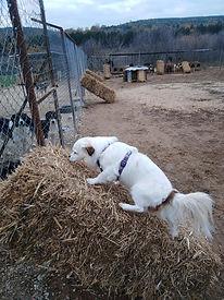 Stroh mit Hund 1.jpg