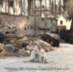 Zwei Katzen in Ruinen.jpg