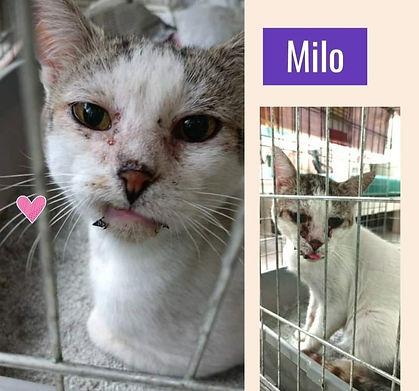 Milo 14.08.2021.jpg