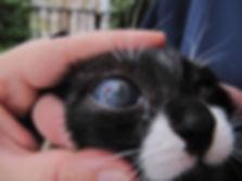 Katze mit Auge.jpg