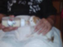 Kitten an Flasche 2.jpg