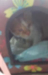 Katze im Transporttasche.jpg