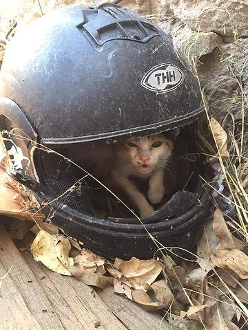 Kitten im August-Motorradhelm.jpg