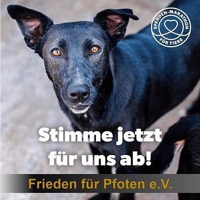 Stimme_jetzt_für_uns_ab_Hund.jpg