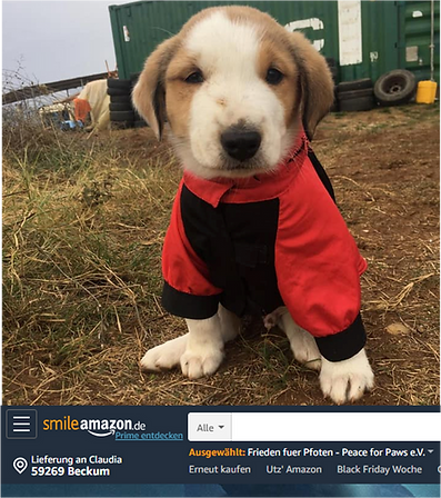 Pummel mit Amazon.png
