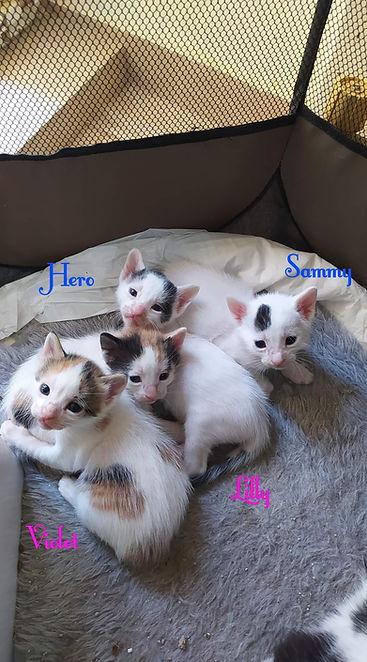 Chayas Kitten.jpg