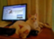 Captain und Mr. Darcy am Laptop.jpg