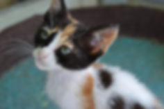 Lillyfee mit beiden Augen.jpg
