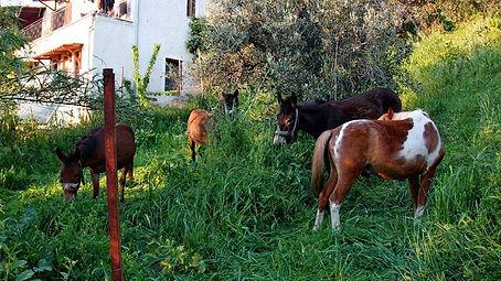 Ponys esel1.jpg