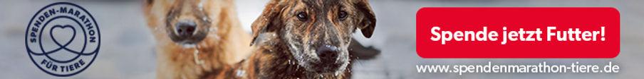 Spenden-Marathon_Spenden_2019_Hund_728x9