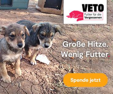 2021_Futter_fuer_die_Vergessenen_300_250