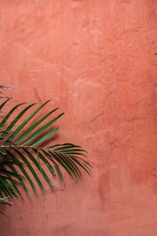 Living Coral: Pantone Colour Of The Year