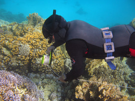 Reef Check in Action 063.jpg