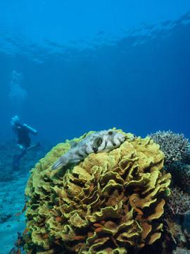 Masbat Bay Conservation EG-203.JPG
