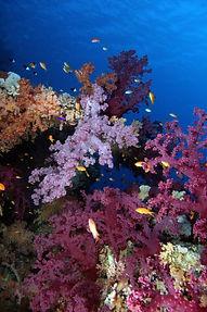 Thomas Reef EG-17.JPG