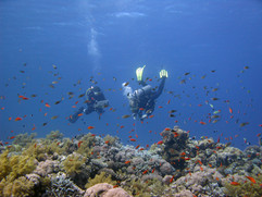 Reef Check in Action 051.JPG