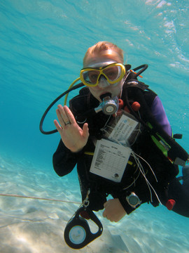Reef Check in Action 077.JPG