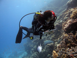 Reef Check in Action 094.JPG