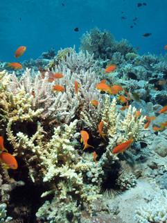 Masbat Bay Conservation EG-204.JPG