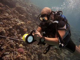 Reef Check in Action 086.JPG