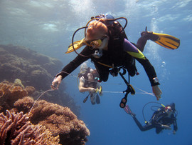Reef Check in Action 100.JPG