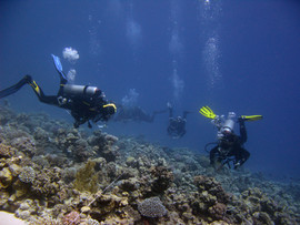 Reef Check in Action 047.JPG
