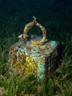 Masbat Bay Conservation EG-014.JPG