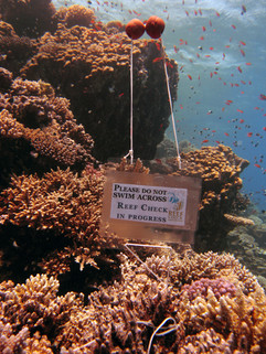 Reef Check in Action 090.JPG