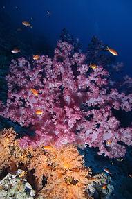 Thomas Reef EG-05.JPG