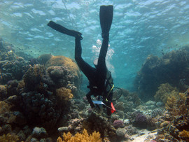 Reef Check in Action 071.jpg