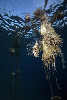Masbat Bay Conservation EG-120.JPG