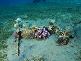Masbat Bay Conservation EG-207.JPG