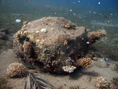 Masbat Bay Conservation EG-196.JPG