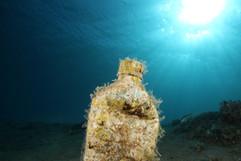 Masbat Bay Conservation EG-029.JPG