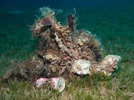 Masbat Bay Conservation EG-169.jpg