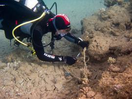 Masbat Bay Conservation EG-176.jpg