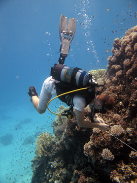 Reef Check in Action 095.JPG