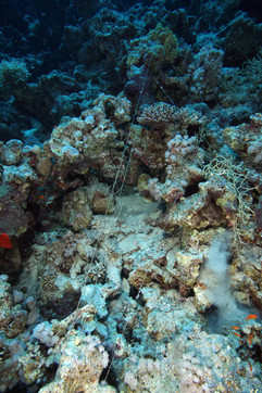 Clean-Up-2009-Fishing-lines-01.JPG