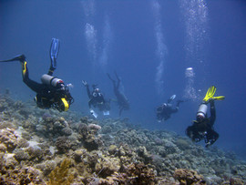 Reef Check in Action 045.JPG