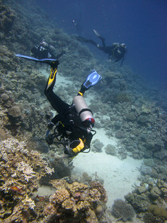Reef Check in Action 050.JPG