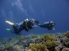 Reef Check in Action 054.JPG