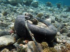 Masbat Bay Conservation EG-004.JPG