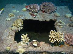 Masbat Bay Conservation EG-013.JPG