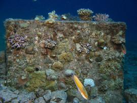 Masbat Bay Conservation EG-012.JPG