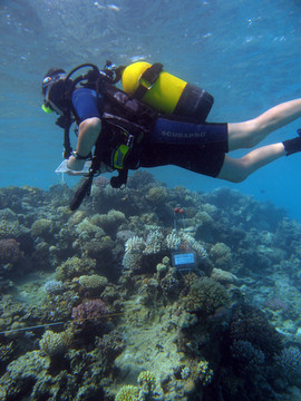 Reef Check in Action 084.JPG