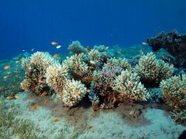 Masbat Bay Conservation EG-200.JPG